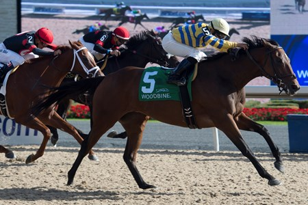 Jockey Jermaine Bridgemohan guides Sweater Weather to victory in the $125,000 Classy 'N Smart Stakes at Woodbine Racetrack Sept. 25, 2016 at Woodbine Racetrack.