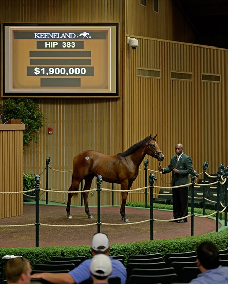 Hip 383 colt  War Front/Havre de Grace RNA's at 1.9 million  Yearlings at Keeneland on Sept. 13, 2016, in Lexington, Ky.