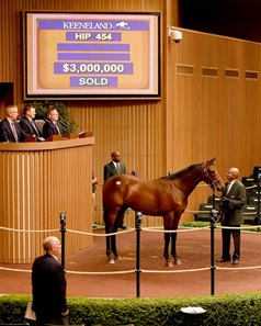 Hip 454, a half brother to champion Beholder and grade I-winning sire Into Mischief, brought $3 million Sept. 14