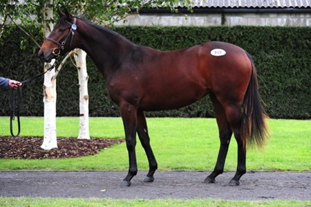 Acclamation filly tops final session of Tattersalls Ireland yearling sale, Part II.
