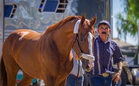 California Chrome arrives at Santa Anita Sun. Sept. 25, 2016.