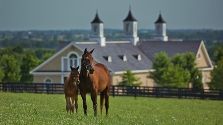 Frank Stronach is selling his Adena Springs property near Paris, Ky.