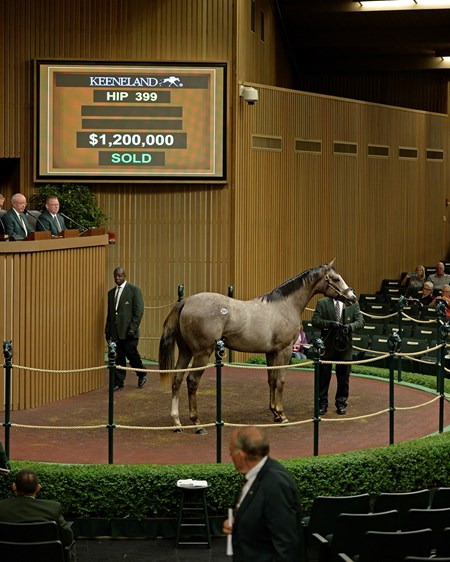 Hip 399 colt by Tapit from Hooh Why from Baccari Bloodstock brings $1.2 million. 2016 Keeneland September