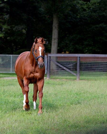 Curlin at Hill n Dale farm near Lexington, Ky., on Aug. 24, 2016