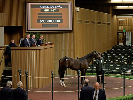 Hip 467 colt by War Front from Love and Pride from Four Star Sales, agent, brought $1.3 M from Shadwell Yearlings at Keeneland on Sept. 14, 2016, in Lexington, Ky.