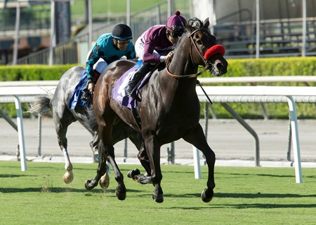 Ambitious Brew wins the first division of the 2016 Eddie D. Stakes, Friday, September 30, 2016 at Santa Anita Park, Arcadia CA.