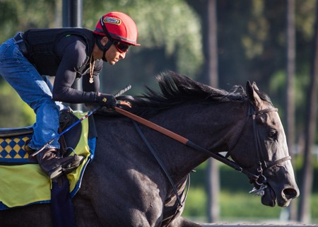 Arrogate works at Santa Anita Sept. 27.