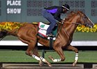 California Chrome worked 6 furlongs in 1:13 1/5 at Los Alamitos Race Course on Sept. 17.