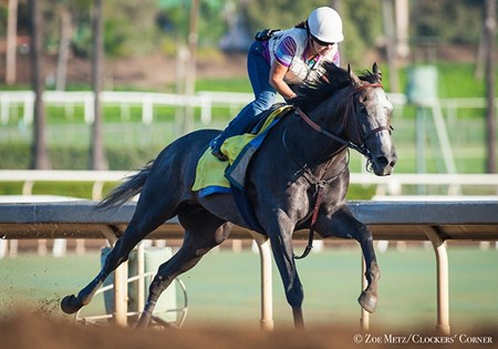 Arrogate - Santa Anita, September 10, 2016