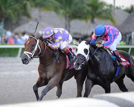 Awesome Banner wins the 2016 Florida Sire Series - Prized Division
