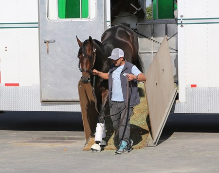 Exaggerator arrived at Parx Racing in Bensalem, Pennsylvania on September 21, 2016.