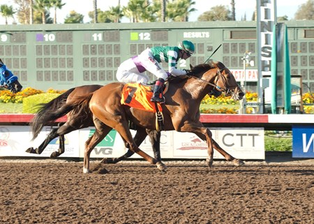 Accelerate wins the 2016 Los Alamitos Derby