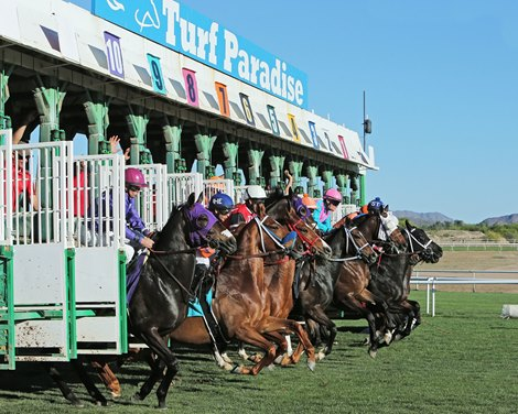 Turf Paradise Gearing Up For Oct 15 Opening Bloodhorse
