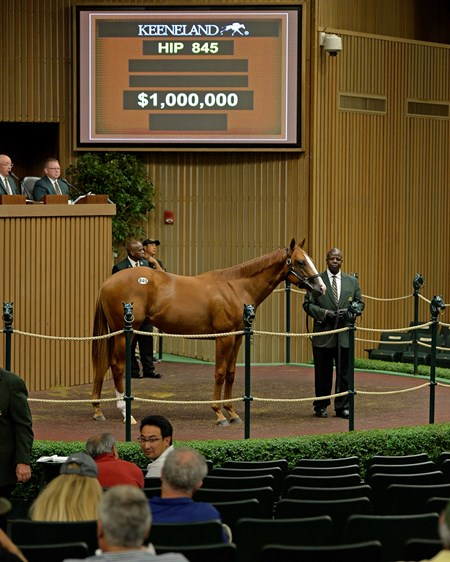 Hip 845 colt by Curlin from Glinda the Good and Hill 'n' Dale, agent for Stonestreet, brings $1 million from Mike Ryan, Agent Yearlings at Keeneland on Sept. 16, 2016, in Lexington, Ky.