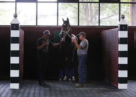 Songbird schooled in the Parx Racing paddock during the 6th race Sept. 20 in Bensalem, Pennsylvania .