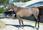 Tapit colt from Eaton Sales