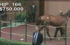 Hip 166 - Keeneland September Sale 2016