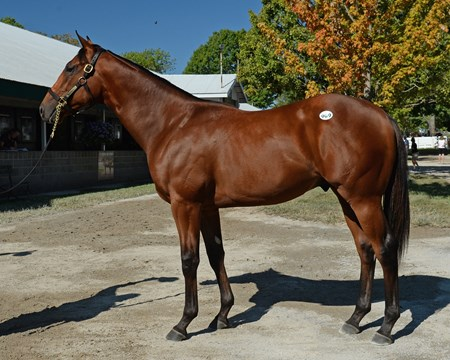 2015 Keeneland September Yearling Sale Hip 909 - Practical Joke