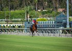 Santa Anita Opens New Turf Course