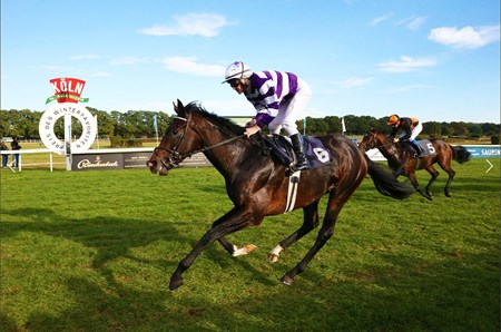 Langtang winning the Preis des Winterfavoriten Oct. 16. He is the first black-type winner for the late Campanologist.