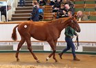 Shadwell Stays Active into Tattersalls Book 2