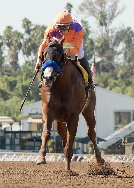 Lord Nelson wins the 2016 Santa Anita Sprint Championship, Saturday, October 8, 2016 at Santa Anita Park, Arcadia CA.