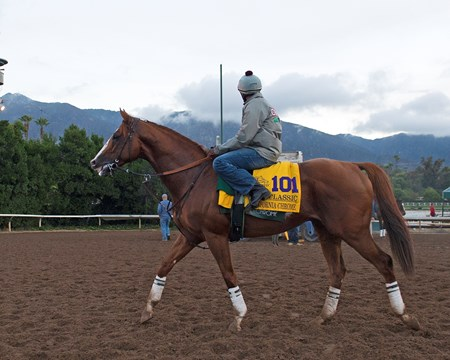 California Chrome Works at Santa Anita in preparation for 2016 Breeders' Cup on Oct. 31, 2016, in Arcadia, CA.