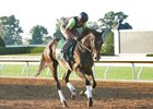 Harmonize gallops over the main track at Keeneland
