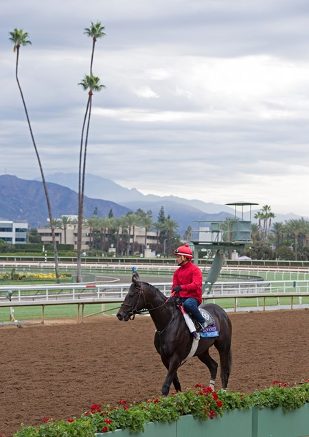 Not This Time Works at Santa Anita in preparation for 2016 Breeders' Cup on Oct. 29 2016, in Arcadia, CA.