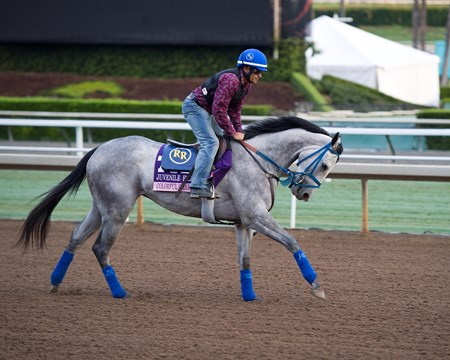 Colorful Charades Works at Santa Anita in preparation for 2016 Breeders' Cup on Oct. 31, 2016, in Arcadia, CA.