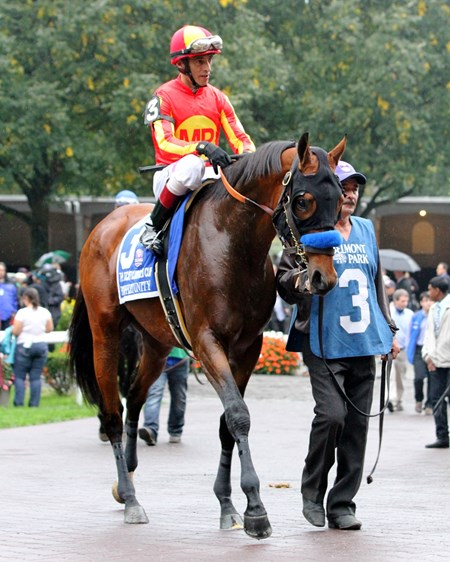 Hoppertunity with John Velazquez heading to the track prior to winning the 98th Running of The Jockey Club Gold Cup (GI) at Belmont Park on October 8, 2016.