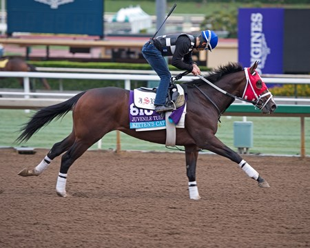 Kitten's Cat Works at Santa Anita in preparation for 2016 Breeders' Cup on Oct. 31, 2016, in Arcadia, CA.