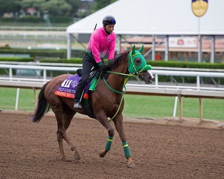 Nuovo Record