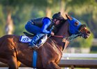 Gloryzapper working at Santa Anita Park Oct. 18
