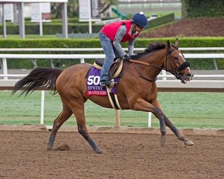 Masochistic with Mike Smith, Sprint. Works at Santa Anita in preparation for 2016 Breeders' Cup on Oct. 29 2016, in Arcadia, CA.