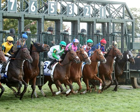 Quidura wins the 2016 Pin Oak Valley View Stakes