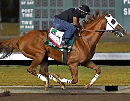 California Chrome - Los Alamitos, October 22, 2016