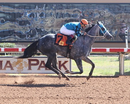 Diabolical Dame Wins 2016 New Mexico Classic Cup Distaff Sprint Championship