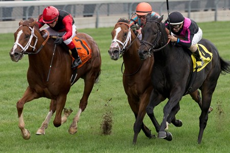 Jockey Luis Contreras guides Calgary Cat to victory (red and black silks) in the $300,000 dollar Nearctic Stakes at Woodbine.