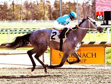 Chance First Black Type Winner For Skipshot Bloodhorse