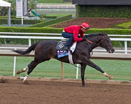 Not This Time Retired Due to Injury - BloodHorse