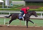 Not this Time works at Santa Anita Park Oct. 29 in preparation for 2016 Breeders' Cup Juvenile (gr. I)