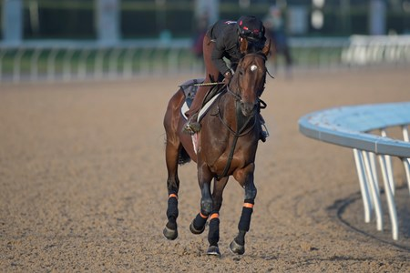 Protectionist - Woodbine, October 15, 2016
