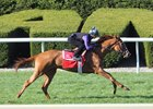 Catch a Glimpse Preps on Keeneland Turf
