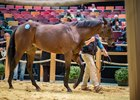 Fillies Dominate Second Arqana Sale Session