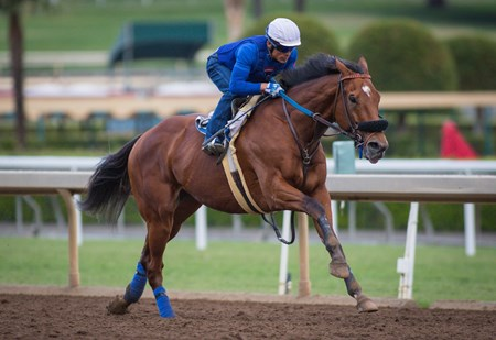 Vyjack - Santa Anita, October 23, 2016