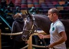 Record Gross, Average Up at Arqana Day 1