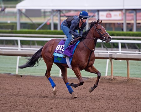Oscar Performance Works at Santa Anita in preparation for 2016 Breeders' Cup on Oct. 31, 2016, in Arcadia, CA.