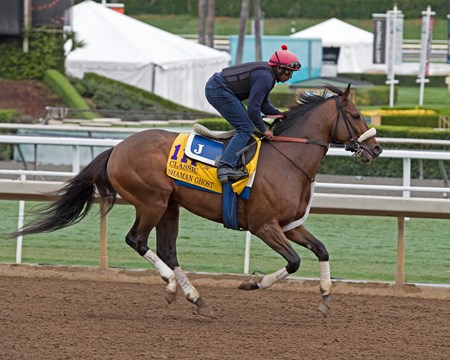 Shaman Ghost, Classic. Works at Santa Anita in preparation for 2016 Breeders' Cup on Oct. 29 2016, in Arcadia, CA.