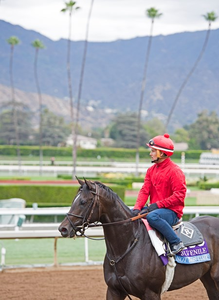 Not this Time in Juvenile Works at Santa Anita in preparation for 2016 Breeders' Cup on Oct. 29 2016, in Arcadia, CA.